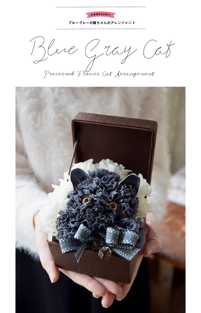 ブリティッシュショートヘアー、シャルトリュー、スコティッシュフォールドなどブルーグレーの被毛が美しい猫ちゃん